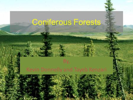 Coniferous Forests By, Kevin Donnelly and Tayeb Kenzari.