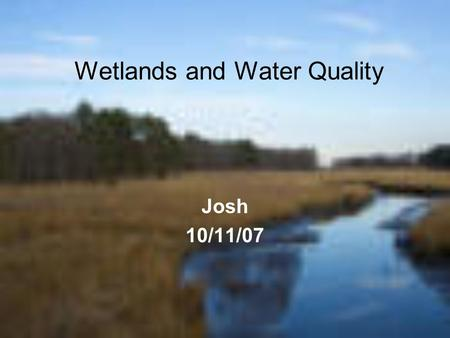Wetlands and Water Quality Josh 10/11/07. Wetlands and why they are important. One reason wetlands are important is because they support many different.