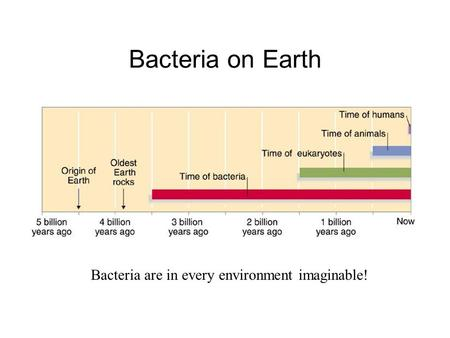 Bacteria on Earth Bacteria are in every environment imaginable!