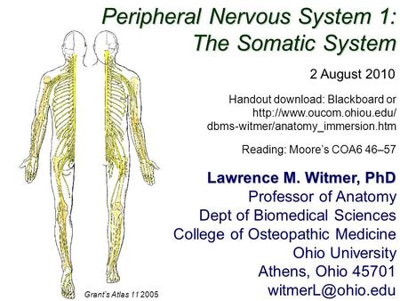Peripheral Nervous System 1: The Somatic System Lawrence M. Witmer, PhD Professor of Anatomy Dept of Biomedical Sciences College of Osteopathic Medicine.