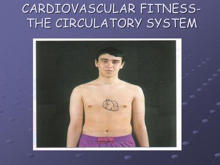 CARDIOVASCULAR FITNESS- THE CIRCULATORY SYSTEM