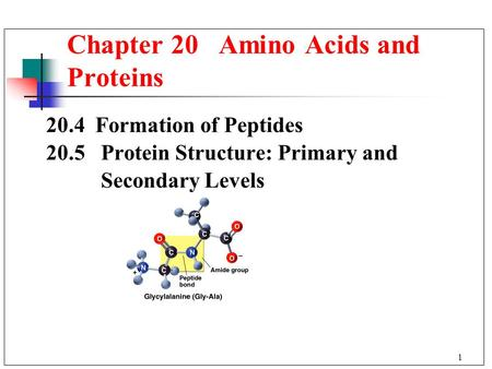 1 20.4 Formation of Peptides 20.5 Protein Structure: Primary and Secondary Levels Chapter 20 Amino Acids and Proteins.