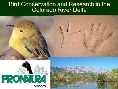 Bird Conservation and Research in the Colorado River Delta.