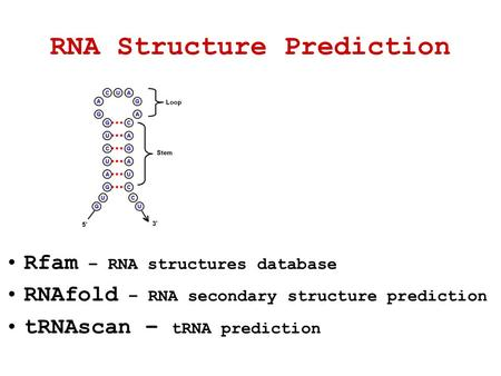 RNA Structure Prediction Rfam – RNA structures database RNAfold – RNA secondary structure prediction tRNAscan – tRNA prediction.