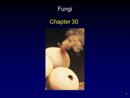 1 Fungi Chapter 30. 2 Shared Characteristics Distinctive fungal features – Fungi are heterotrophs. – Fungi have several cell types. – Some fungi have.