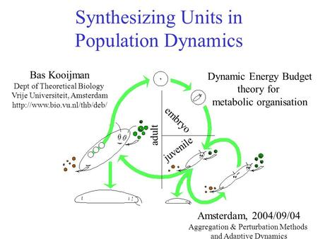 Synthesizing Units in Population Dynamics Bas Kooijman Dept of Theoretical Biology Vrije Universiteit, Amsterdam  Amsterdam,