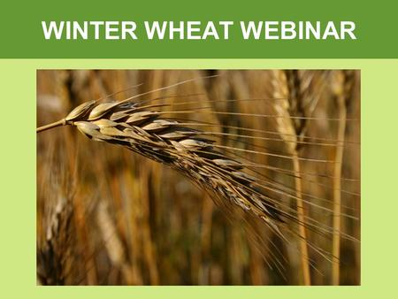 WINTER WHEAT WEBINAR. Why your Customers should be growing Winter Wheat Paul Thoroughgood P.Ag Ducks Unlimited Canada.