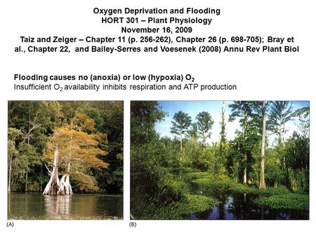 Oxygen Deprivation and Flooding HORT 301 – Plant Physiology November 16, 2009 Taiz and Zeiger – Chapter 11 (p. 256-262), Chapter 26 (p. 698-705); Bray.