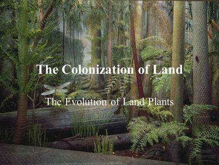 The Colonization of Land The Evolution of Land Plants.