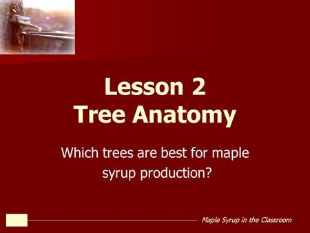 Which trees are best for maple