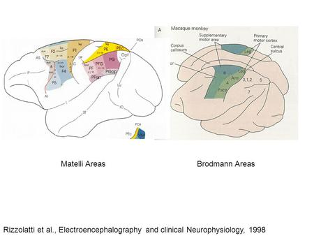 Brodmann Areas Rizzolatti et al., Electroencephalography and clinical Neurophysiology, 1998 Matelli Areas.