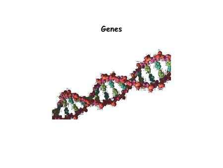 Genes. Outline  Genes: definitions  Molecular genetics - methodology  Genome Content  Molecular structure of mRNA-coding genes  Genetics  Gene regulation.