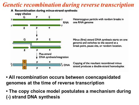 Genetic recombination during reverse transcription