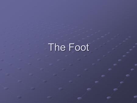 The Foot. Foot Anatomy The foot has many articulations which makes it a complex bone and soft tissue structure that undergoes a great deal of stress.