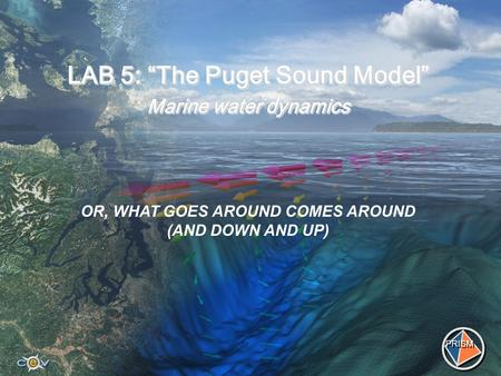 "LAB 5: ""The Puget Sound Model"" Marine water dynamics PRISM OR, WHAT GOES AROUND COMES AROUND (AND DOWN AND UP)"