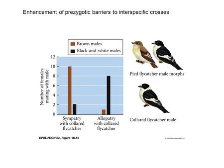 Enhancement of prezygotic barriers to interspecific crosses.