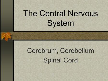 The Central Nervous System Cerebrum, Cerebellum Spinal Cord.