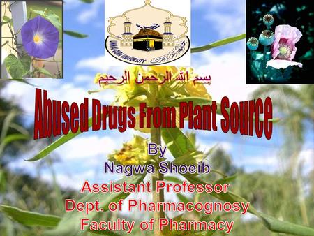 Abused Drugs From Plant Source