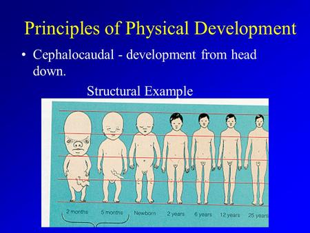 Principles of Physical Development Cephalocaudal - development from head down. Structural Example.