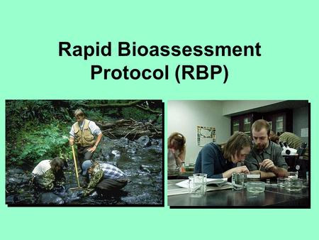 Rapid Bioassessment Protocol (RBP). Background to RBP changes in community/assemblage composition used to evaluate existence and degree of impact.
