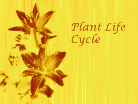 Plant Life Cycle  .