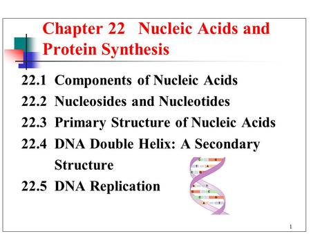 Chapter 22 Nucleic Acids and Protein Synthesis