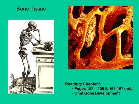 Reading: Chapter 6 Pages 152 – 159 & 163-167 only! Omit Bone Development Bone Tissue.
