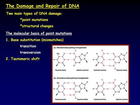 The Damage and Repair of DNA The molecular basis of point mutations 1. Base substitution (mismatches) transition transversion Two main types of DNA damage: