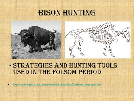 Bison Hunting Strategies and Hunting tools used in the Folsom period