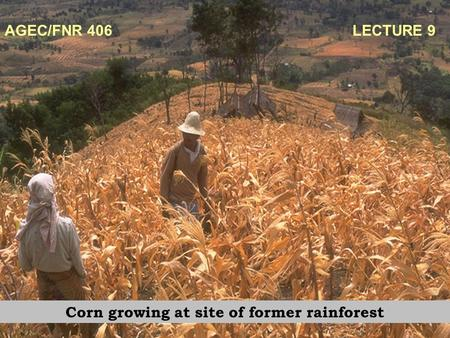 AGEC/FNR 406 LECTURE 9 Corn growing at site of former rainforest.