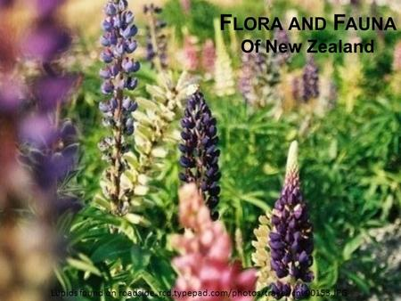 Flora and Fauna Of New Zealand