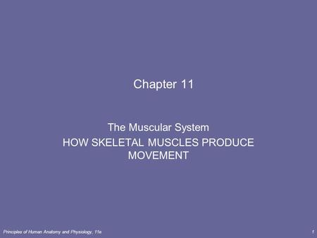 The Muscular System HOW SKELETAL MUSCLES PRODUCE MOVEMENT