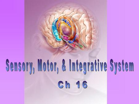 sensory motor and integrative systems Definitions • sensory input // a stimulus - vital to the integrity of personality and intellectual function • sensory receptor // a structure of a neuron that is .
