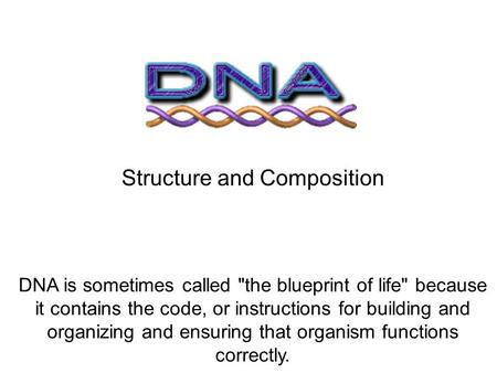 Dna the blueprint of life ppt video online download structure and composition malvernweather Images