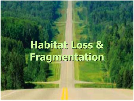 Habitat Loss & Fragmentation. Habitat Loss Roads & Highways Farmland Urban sprawl Over 80% of Ontario's original forests are gone Leads to loss of species.