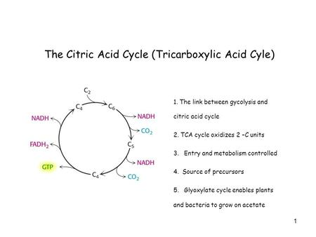 1 The Citric Acid Cycle (Tricarboxylic Acid Cyle) 1. The link between gycolysis and citric acid cycle 2. TCA cycle oxidizes 2 –C units 3. Entry and metabolism.