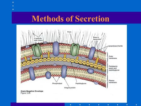 Methods of Secretion. Protein Secretion Type II Secretion (GEP) Sec dependent Signal peptide Chaperone 2 Stage E.gIgA-protease, Pertussis toxin, Serratia.