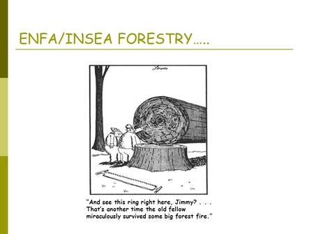 """And see this ring right here, Jimmy?... That's another time the old fellow miraculously survived some big forest fire."" ENFA/INSEA FORESTRY….."