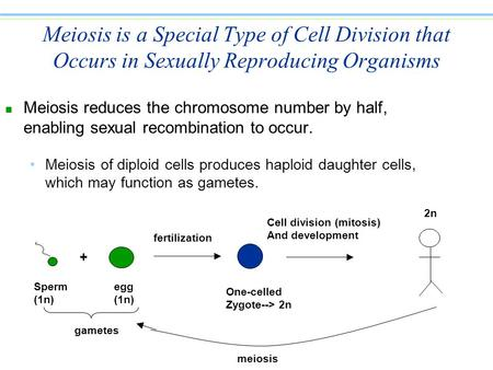 Meiosis is a Special Type of Cell Division that Occurs in Sexually Reproducing Organisms n Meiosis reduces the chromosome number by half, enabling sexual.