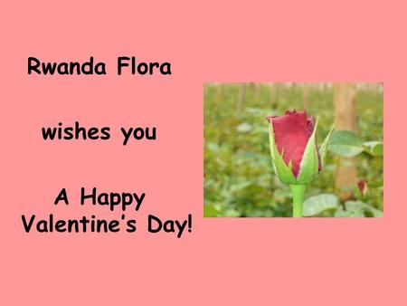 Rwanda Flora wishes you A Happy Valentine's Day!.