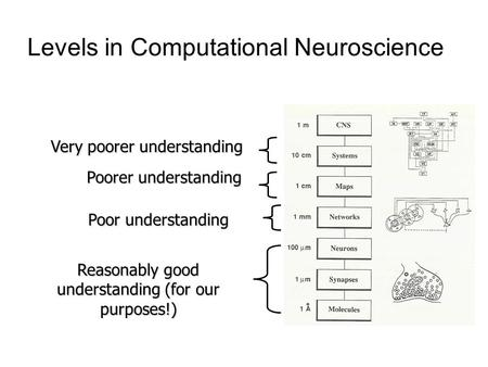 Levels in Computational Neuroscience Reasonably good understanding (for our purposes!) Poor understanding Poorer understanding Very poorer understanding.