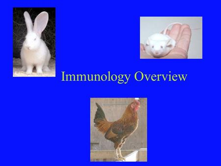 Immunology Overview. Innate vs Acquired Immunity Non-specific, rapid Physical, Chemical Barriers Complex Biochemical Mechanisms –Fever –Inflammation –Complement.