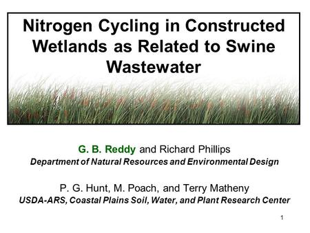 1 Nitrogen Cycling in Constructed Wetlands as Related to Swine Wastewater G. B. Reddy and Richard Phillips Department of Natural Resources and Environmental.