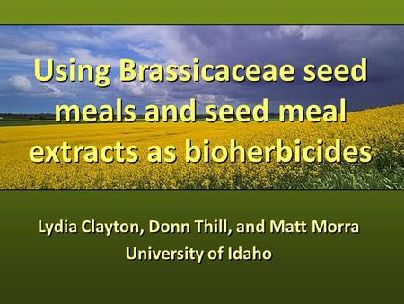 Using Brassicaceae seed meals and seed meal extracts as bioherbicides Lydia Clayton, Donn Thill, and Matt Morra University of Idaho Lydia Clayton, Donn.