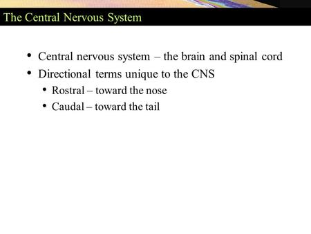 The Central Nervous System Central nervous system – the brain and spinal cord Directional terms unique to the CNS Rostral – toward the nose Caudal – toward.