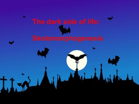 The dark side of life: Skotomorphogenesis. Cells and cell growth Membranes and cell walls Fertilization and embryogenesis Seed development and dormancy.