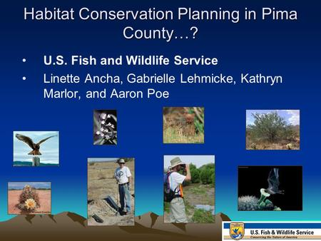 Habitat Conservation Planning in Pima County…? U.S. Fish and Wildlife Service Linette Ancha, Gabrielle Lehmicke, Kathryn Marlor, and Aaron Poe.