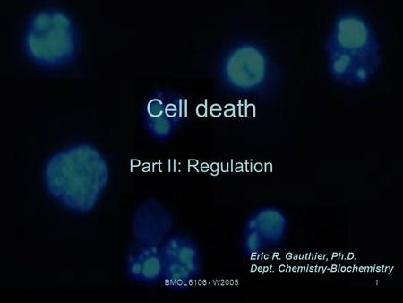 BMOL 6106 - W20051 Cell death Part II: Regulation Eric R. Gauthier, Ph.D. Dept. Chemistry-Biochemistry.