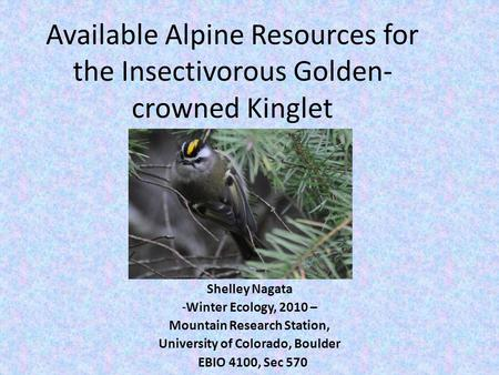 Available Alpine Resources for the Insectivorous Golden- crowned Kinglet Shelley Nagata -Winter Ecology, 2010 – Mountain Research Station, University of.