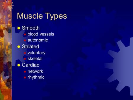 Muscle Types  Smooth  blood vessels  autonomic  Striated  voluntary  skeletal  Cardiac  network  rhythmic.